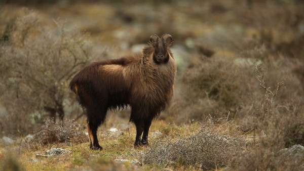 Ubuntu 14.04 Codenamed Trusty Tahr